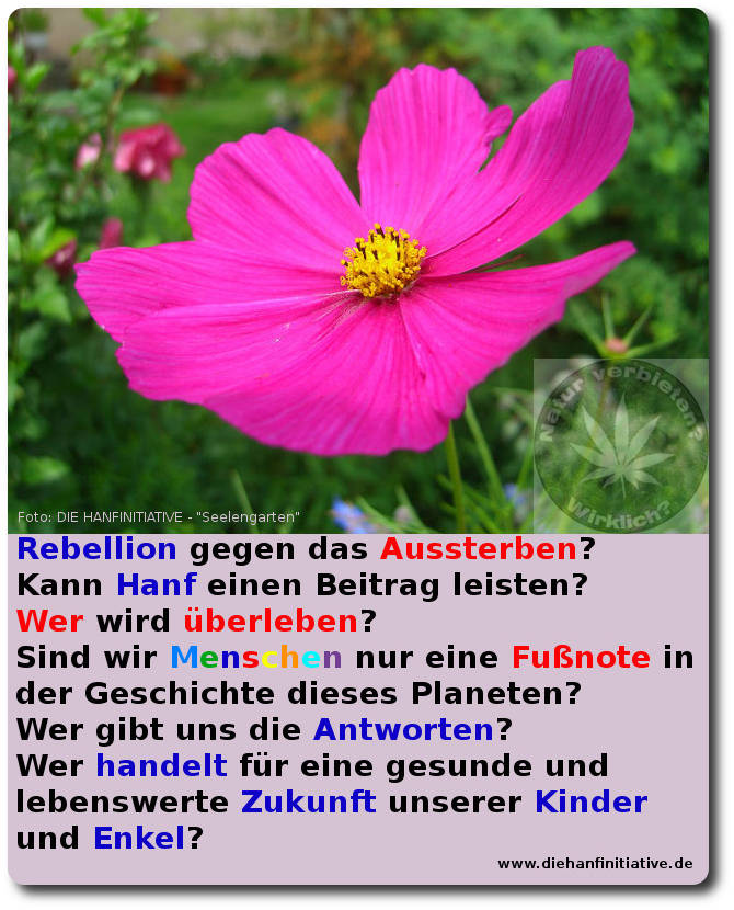 Rebellion im Seelengarten
